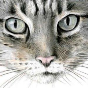 Cat Donald