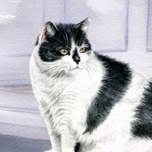 Cat-Meg