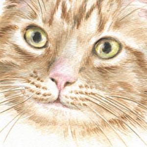 CAT-THOMAS-web