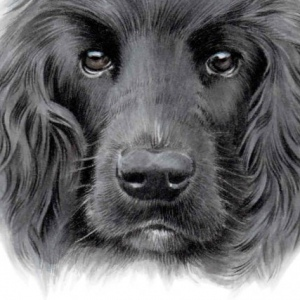 Dog Charlie