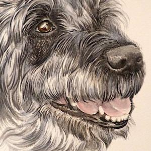 DOG-ECHO-ARTWORK-web
