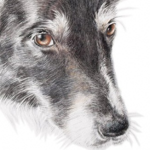 Dog-Kelsey