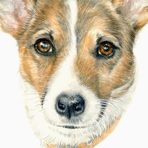 Dog-Hamish