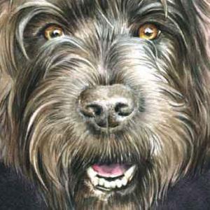 Dog Melody