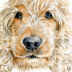Dog-Riley-1
