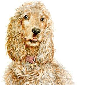 Dog-Riley-2