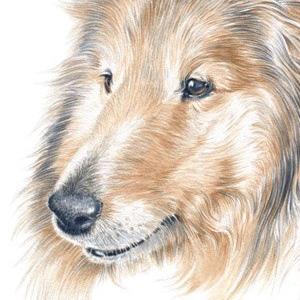Dog-Roxy