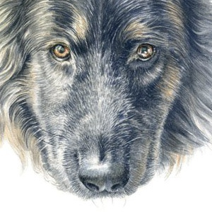 Dog-Sapphire