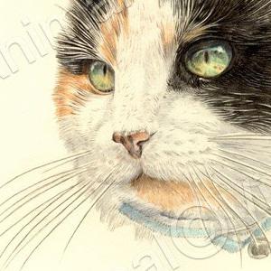 Cat-Cassie