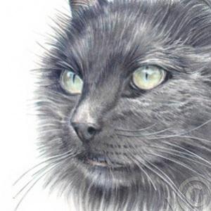 Cat-Nero