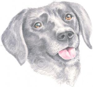 Dog-Ailsa