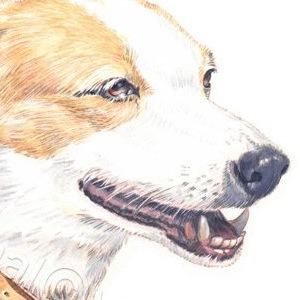Dog-Moira