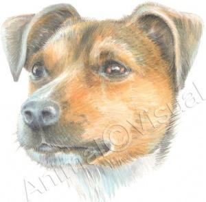 Dog-Rusty-2