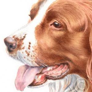 Dog-Taffy