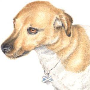 Dog-Laddie