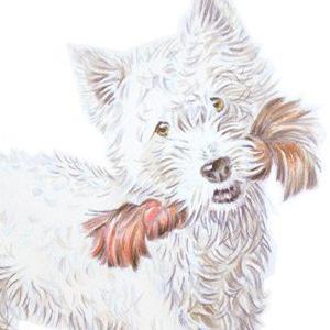 Dog-Moss