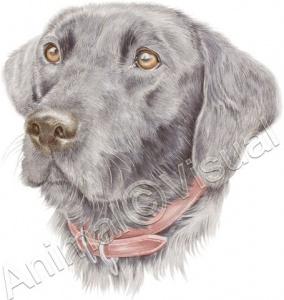 Dog-Sam