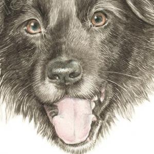 Dog-Star