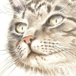 Cat-Tillie