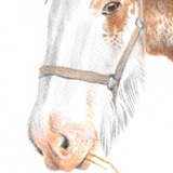 Heavy horse called Bluebell. Watercolour.