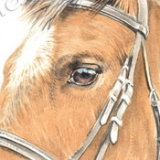 Dressage horse called Jim. Watercolour.
