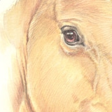 Dressage horse called Teaser. Watercolour.
