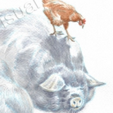 Two sleeping Kuna Kuna pigs with playful chicken. Watercolour.