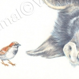Sparrow next to sleeping Kuna Kuna pig. Watercolour.