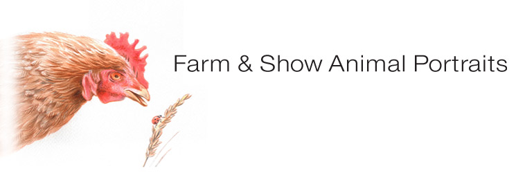 Farm & Show Animal Portraits