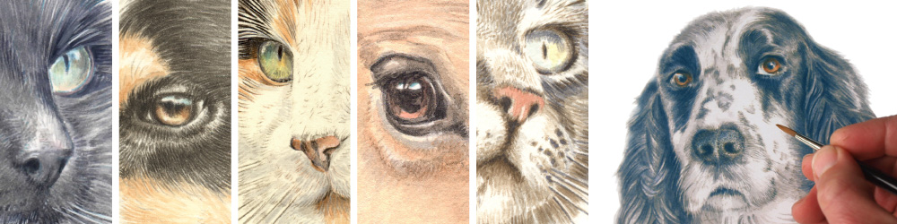 Animal Visual Pet Portraits